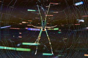 蜘蛛巣13-1