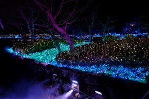 奈良夜16-24