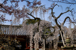 氷室神社16-42
