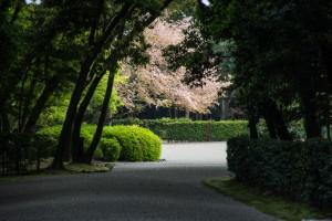 橿原神宮16-41