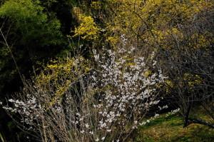 桜と17-31