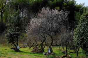 春17-31