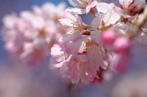 桜マクロ17-41