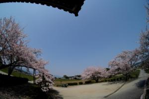 魚桜20-41