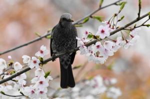 花鳥20-41