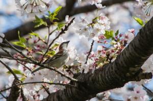 花鳥20-42